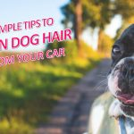 Cleaning Dog Hair From Your Car Is Easy With These 5 Simple Tips