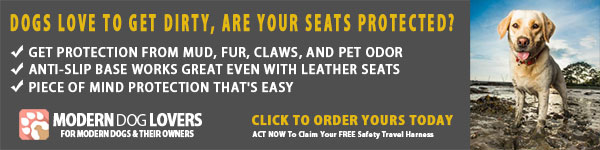 Car Seat Covers For Dogs To Keep Your Seats Clean