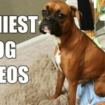 Funny Dog Videos