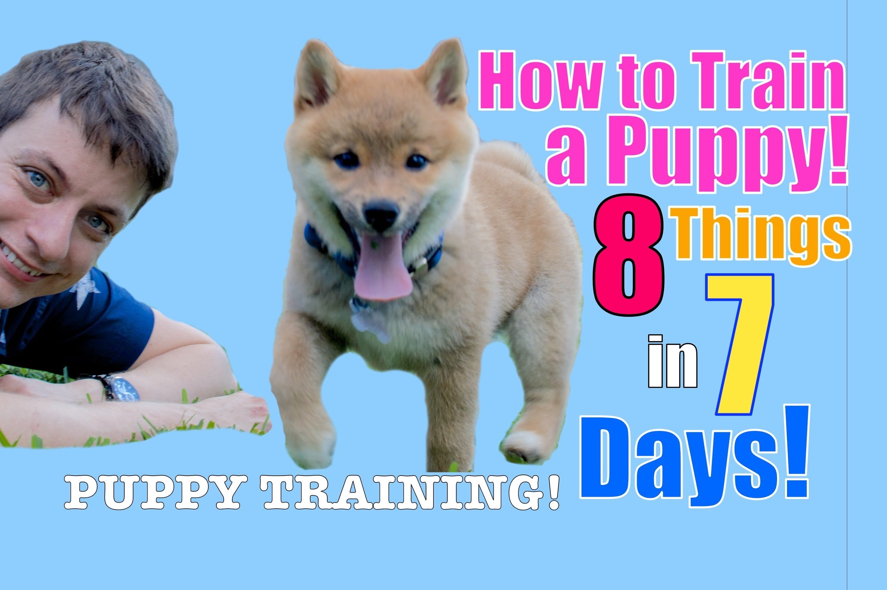 Shiba Inu Puppy Training (STOP Puppy Biting, Come, Stay